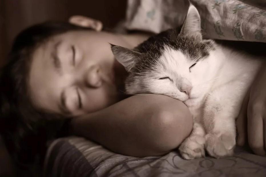 5 причин, почему кошка спит с человеком.